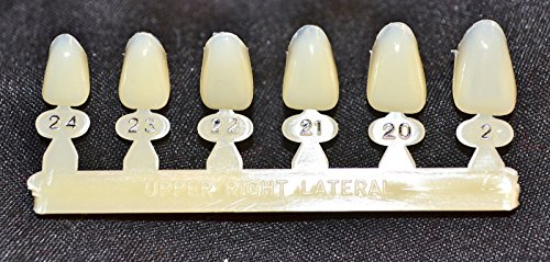 #7 Upper Right Lateral tooth - Dental Polycarbonate Temporary Crowns 6 sizes from Manufactured by Directa