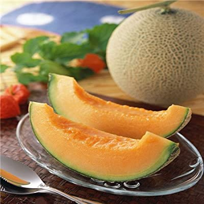 Hot Sale 50 Seasons cantaloupe melon seed sowing vegetable seeds fruit seed planting sweet crispy balcony free shipping