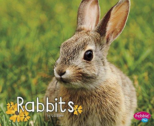Rabbits (Woodland Wildlife)