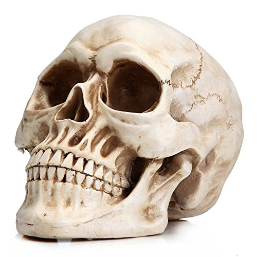 EBTOYS Replica Realistic Human Skull Head Bone Model Halloween Costumes Hounted House Scary Creepy Prop Masquerade Decoration]()