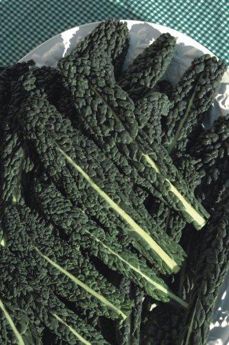 SeeKay Borecole 'Black Tuscany' (Kale) Appx 1200 seeds