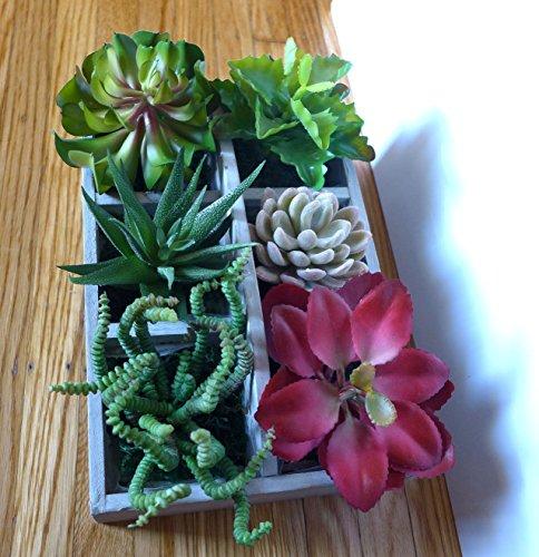 (Ship from USA) 6 Different Mini Artificial Plants Desert Succulent Home Restaurant Landscape *JPOU842H5ET11448