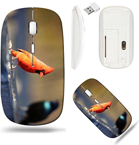 Liili Wireless Mouse White Base Travel 2.4G Wireless Mice with USB Receiver, Click with 1000 DPI for notebook, pc, laptop, computer, mac book One Cardinal and one Common Grackle birds Photo 20655150