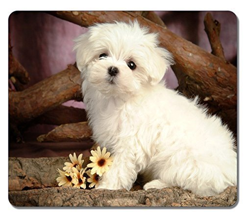 Large Mousepad High Quality 13563 Maltese Puppy Animal Art Natural Eco Rubber Mousepad Design Durable Mouse Mat Computer Accessories Big Gaming Mouse Pad