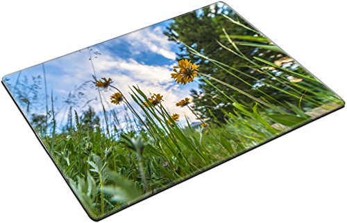 Gaillardia Blanket Flower (MSD Place Mat Non-Slip Natural Rubber Desk Pads design: 30383041 Blanket Flower Gaillardia aristata From the ground up Rocky Mountain Colorado)