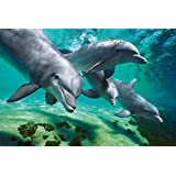 GB eye 61 x 91.5 cm Dolphins Underwater Maxi Poster, Assorted