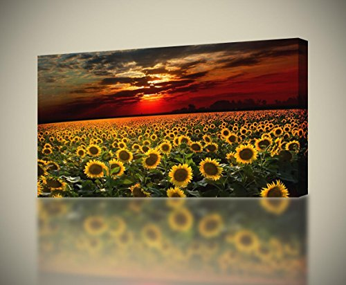 Sunflower Field Sunset CANVAS PRINT Home Wall Decor Giclee Art Flowers , Large