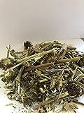 Organic Bio Herbs-Organic Dried Echinacea (Echinacea Purpurea) 4 Oz. For Sale