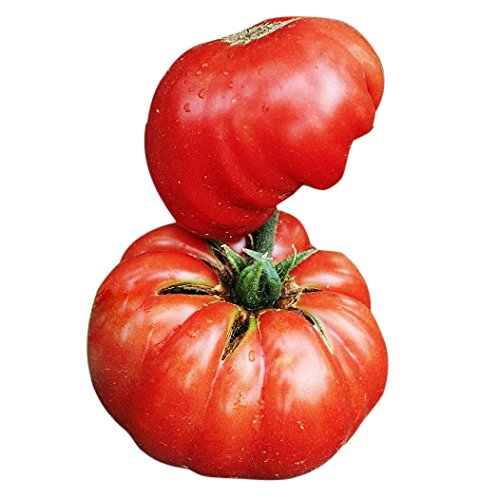 Organic Mortgage Lifter Tomato Seeds - Large Tomato - One of The Most Delicious Tomatoes for Home Growing, Non GMO - Neonicotinoid-Free.