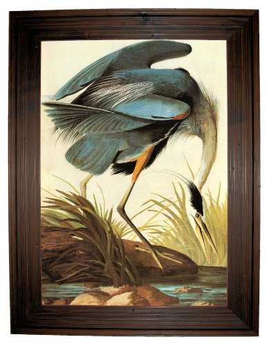 Audubon Great Blue Heron Size - Rustic Brown Framed Canvas Print Reproduction 25 x ()