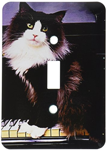 - 3dRose lsp_575_1 Tuxedo Cat Single Toggle Switch