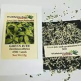 Vegetable Green Jute Seeds,saluyot, Molokhia, Egyptian Spinach Seeds, Rau Day Seeds 4500+(12g) by Viablekitchenseeds .US Seller