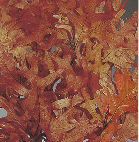 Green Floral Crafts Preserved & Dried Oak Leaves 1/2 lb Bunch -Autumn Rust