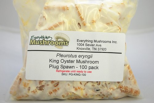 Oyster Plug - 100 Wooden PLUGS to grow King oyster mushrooms