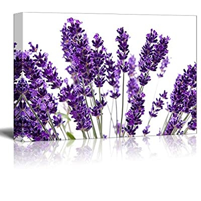 Macro View of Lavender Over White Background Beautiful Floral Flower Photograph - Canvas Art Wall Art - 16