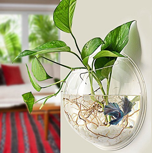PRUGNA Wall-Hanging Fish Bowl Acrylic Wall-Mounted Plant Pot 1 Gallon Fish Tank 11.5-inches Decoration - Light Wall Beta