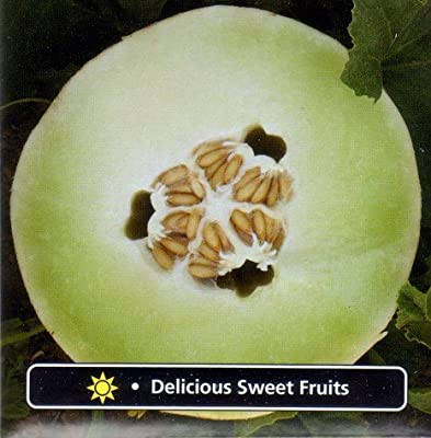 Burpee Cool Green Honeydew Melon - 30 Seeds - Delicious
