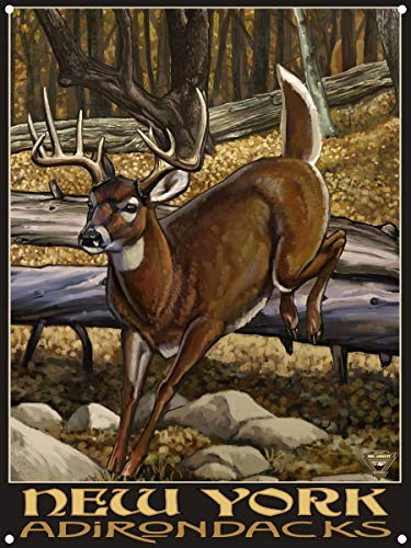 New York Adirondacks Whitetail Deer No Hunter Metal Art Print by Paul A. Lanquist (9