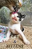 Photo book CAT & KITTEN : Cat books for Kids , Amazing Kittens and Cats , Pet Animals , Lovely Kitten (Love Animal 2)