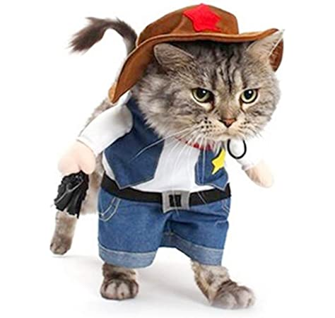 Amazon.com: Idepet Ropa graciosa para mascotas, disfraz de ...