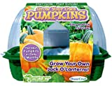 Dunecraft Grow Your Own Pumpkins Science Kit