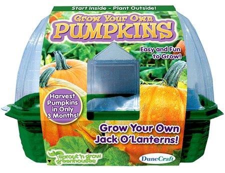 Dunecraft Grow Your Pumpkins Science product image