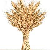 Golden Dried Wheat Sheaves 100 Stems Bundle Premium Autumn Arrangements Full Wholesale DIY Home Table Wedding Xmas New Year Decoration