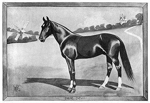 Posterazzi Dare Devil Namerican Standardbred Racehorse. Illustration 1902. Poster Print by (18 x 24)
