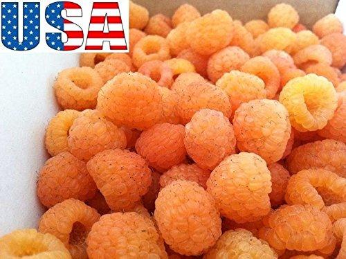 - Golden Raspberry 25-100 seeds