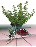 Hirt's Mosquito Repelling Creeping Lemon Thyme Plant - FANTASTIC! - 3 Pot by Hirt's Gardens