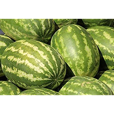50 Seeds/Pack Sweet Big Oval Seedless Watermelon Organic Seeds Professional Pack Edible Non-GMO Juicy Sugar Melon Heirloom Melon Fruit Garden Seeds : Garden & Outdoor
