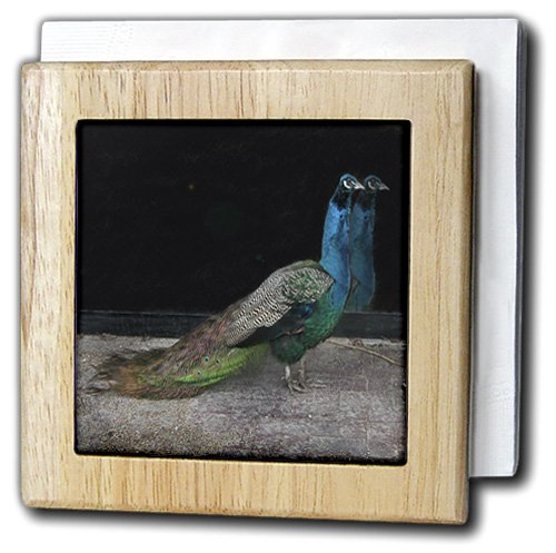 ビバリーターナー写真 – Peacock All Dressed Up With No Where to Go – タイルナプキンホルダー 6 inch tile napkin holder nh_12200_1 6 inch tile napkin holder  B004PXDWXK
