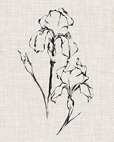 Floral Ink Study II by Ethan Harper Art Print, 22 x 28 inches