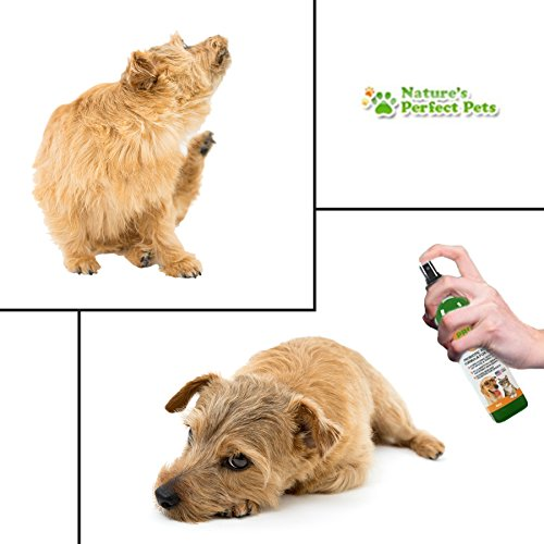 hot sale 2017 Nature's Perfect Pets Probiotic for Dogs Spray