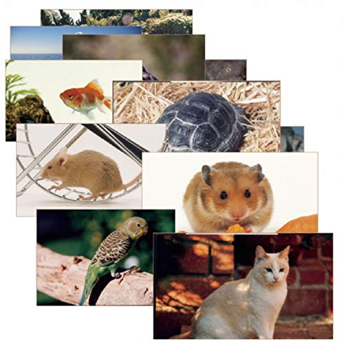 Stages Learning Materials SLM155 Pets Poster Set (Pack of 14)