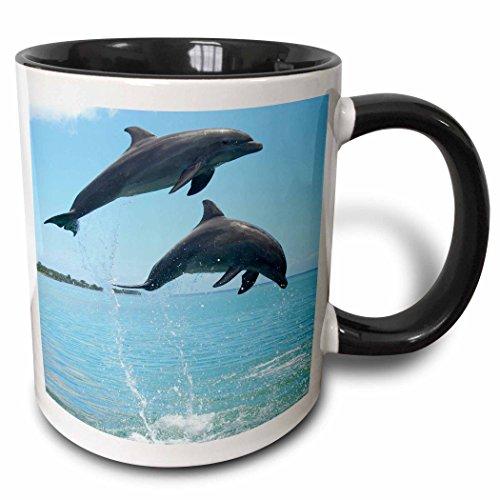 - 3dRose 86555_4 Atlantic Bottlenose Dolphin, Roatan, Honduras Franklin Viola Two Tone Black Mug, 11 oz, White