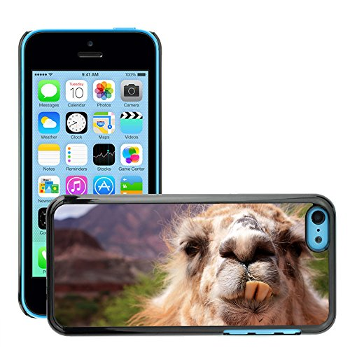 Premio Sottile Slim Cassa Custodia Case Cover Shell // V00002129 drôle de lama // Apple iPhone 5C