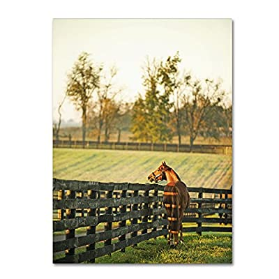 Trademark Fine Art Kentucky Horse Sunrise by Preston Hanging Art Piece