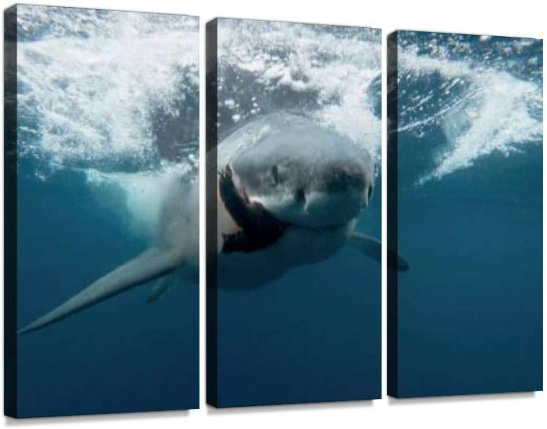YKing1 Great White Shark Cage Diving in Neptune Islands, Port Lincoln, South Australia Wall Art Painting Pictures Print On Canvas Stretched & Framed Artworks Modern Hanging Posters Home Decor 3PANEL