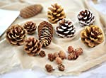 Ximkee 18pcs Assorted Pine Cones Nature PineCones Ornament Gold Crafts Gift Tag Christmas Tree Party Hanging Decoration Display