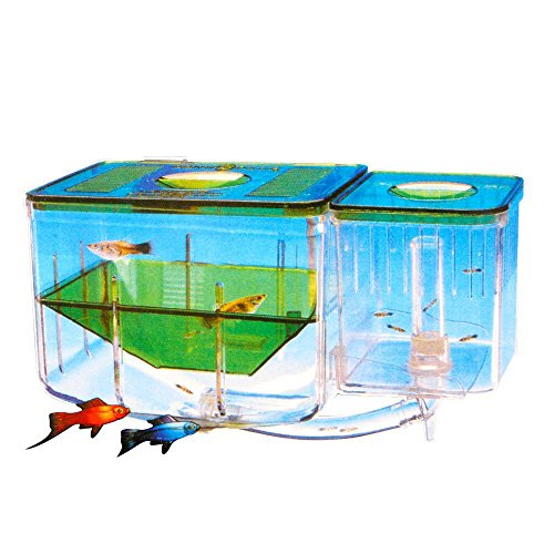 Saim Aqua Nursery Automatic Circulating Hatchery Aquarium by Saim