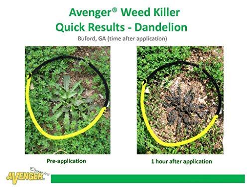Buy organic weed killer