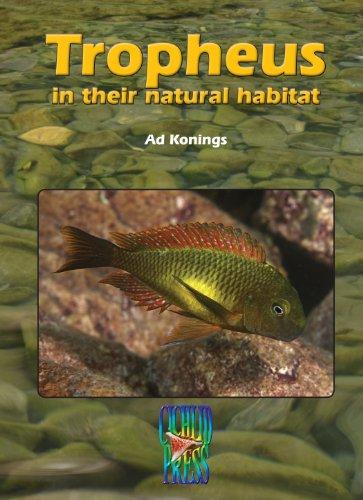 TROPHEUS in their Natural Habitat (Tanganyika (Cichlid Natural)