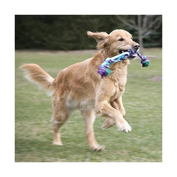 Chew King Training Natural Rubber Dog Toy 2