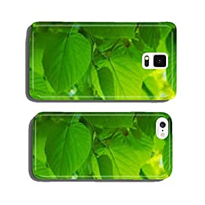Perfect Linde leaves in spring in rich colors cell phone cover case iPhone5