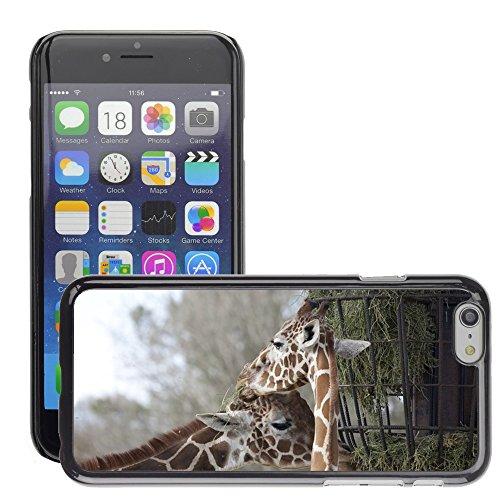 """Just Phone Cases Hard plastica indietro Case Custodie Cover pelle protettiva Per // M00128206 Deux girafes Manger pâturage Food Zoo // Apple iPhone 6 PLUS 5.5"""""""