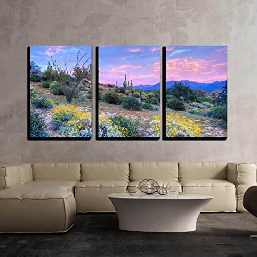 Blooming Sonoran Desert at Sunset x3 Panels