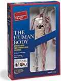 The Human Body, Luann Colombo and Becker and Mayer, Ltd. Staff, 0836232623
