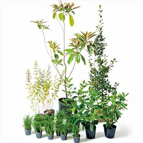 オンリーワン 音で選ぶ 植栽セット トーン ビワ 5感で選べるセット UN6-SET01 B01D1LUS56