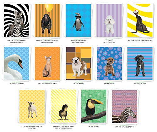 Assorted Animals Premium Greeting Cards - Bulk Set of 14 Cards Including: Birthday, Thank You, New Baby, Inspiration and Blank